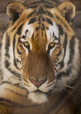 GW Exotic Animal Park, Wynnewood,