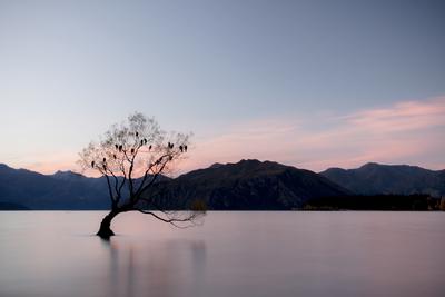 Wanaka Tree - Sunset