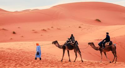 One way of travel in the Sahara,