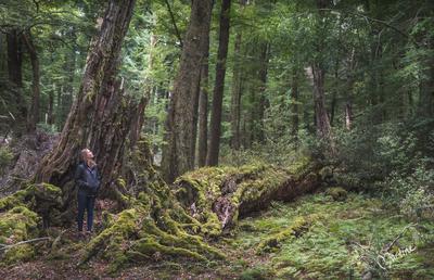 Spot the Hobbits - NZ