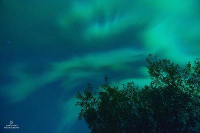 Alberta Northern Lights