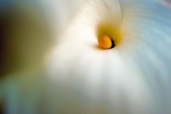 It's a flower it is