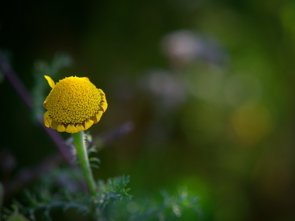 I'm still a flower