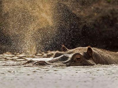 Shower power  Chobe River, Botswana