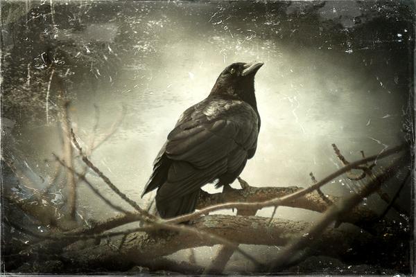 Crow (fine art)
